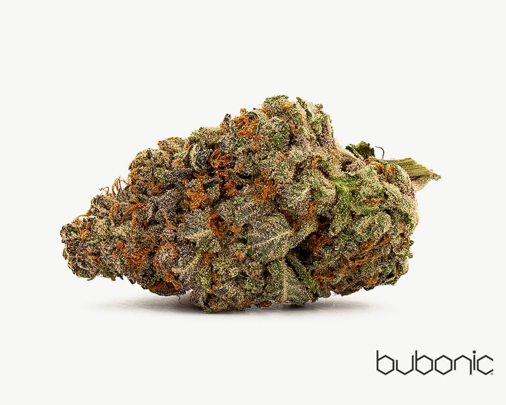 Gorilla Glue Hybrid Strain by Bubonic  | Splitbud Deals