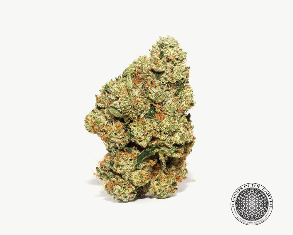 Blue Chip GSC Hybrid Strain by Hands in the Earth | Splitbud Deals